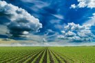 Climate Risk Assessment Service for Agrifood sector