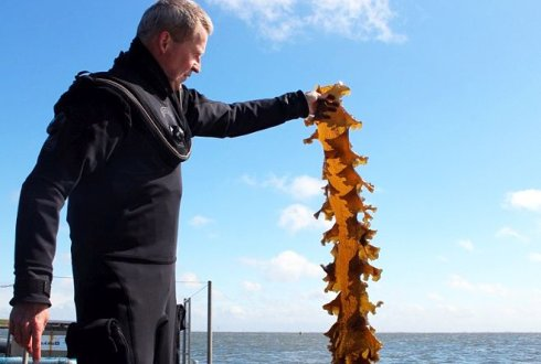 Sustainable seaweed cultivation