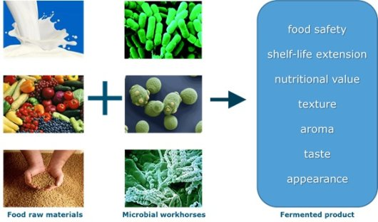 thesis in food fortification Development of the national nutrition action plan 2012-2017 we express our sincere gratitude and  hand washing, deworming, food fortification and management of .