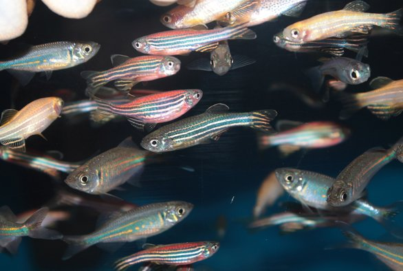 Microbial interactions in the fish gut