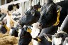 Effect van dichte vloeren op de emissie van broeikasgassen uit een melkveestal