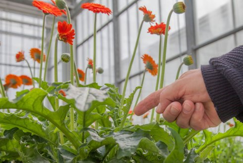 Projects of Wageningen UR Greenhouse Horticulture