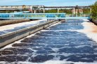 Microalgal-bacteria communities for municipal wastewater treatment