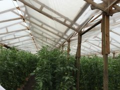 Improve Greenhouses in Chili
