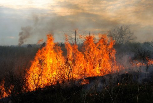 Forest-grassland transitions: How livestock and fire shape grassy biomes