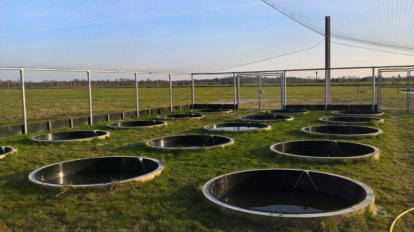 Mesocosms – Rond type beton