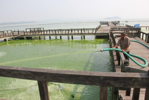 A blooming business. Identifying limits to Lake Taihu's nutrient input