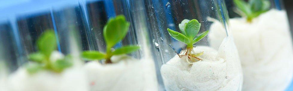 master s plant biotechnology wur
