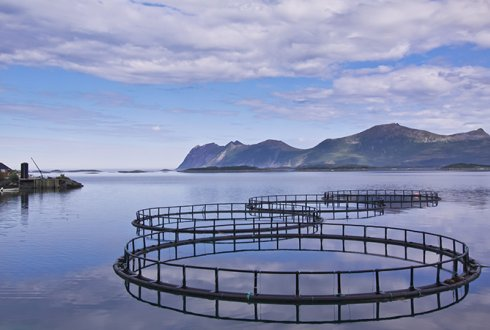 Over 80 Of European Aquaculture Finfish Production