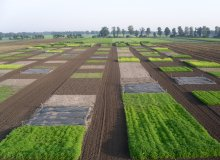 Arable and Field Vegetable Farming