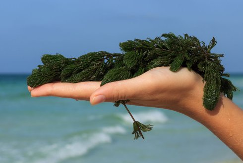 How environmentally friendly is plastic made ​​from seaweed?