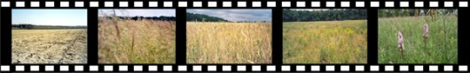 Chronosequence of ex-arable fields from 1-35 years after land abandonment/Picture: Paul Kardol