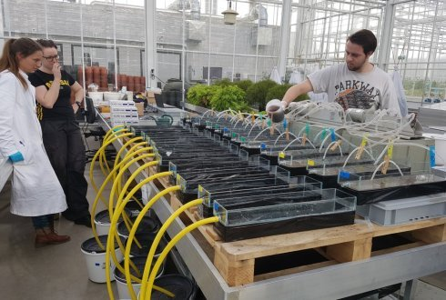 Aquafarm: treating wastewater and harvesting valuable organisms