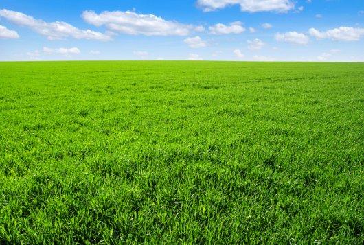 Factsheets over stabiele graslandproductie en penwortel van witte klaver