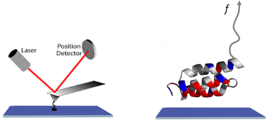 The Atomic Force Microscope, which works by measuring the deflection of a tip on a cantilever using a laser beam, can be used to measure the adhesion force of a single protein sticking to a surface.