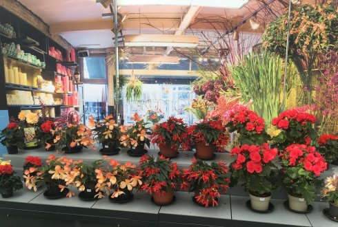 Research on Emotions and Flowers starts with Begonia