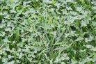 voederwaardering voor gras-klaverkuilen en raapzaadstro