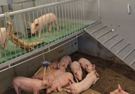 Increased animal welfare Pig Plateau 2.0
