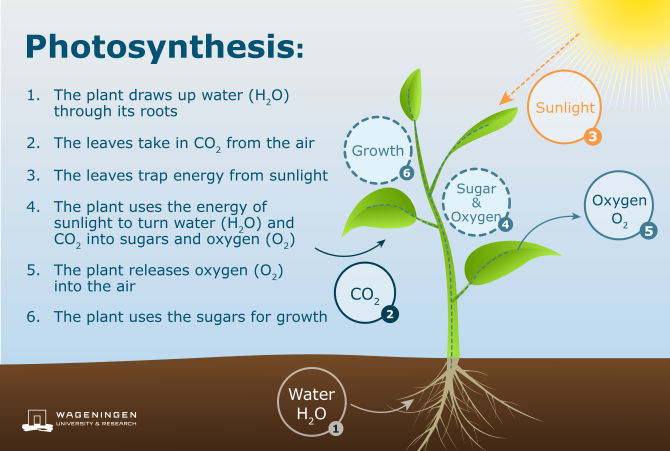 Diagram Photosynthesis process