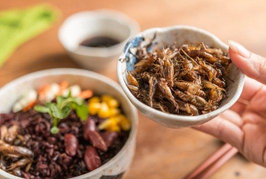 Krekels en zeewier in plaats van vlees? Mansholt-lezing 2019 in het teken van de eiwittransitie