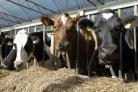 Rapport over reductie van ammoniak-en methaanemissie via voerspoor