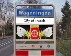 Wageningen City of Insects - photo by Marcel Dicke
