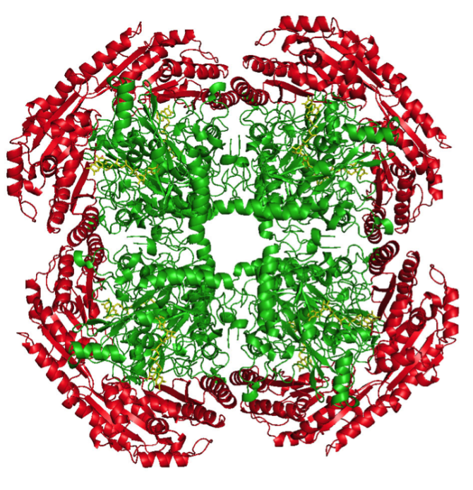 Crystal structure of the octameric flavoenzyme vanillyl alcohol oxidase