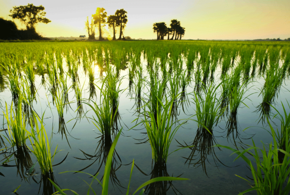 Physiological and genetic dissection of rice tolerance to water-deficit stress