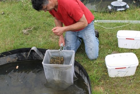 sampling_macroinvertebrates_490x330.jpg