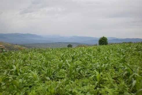 Betere voedselproductie door Integrated Farm Planning in Burundi