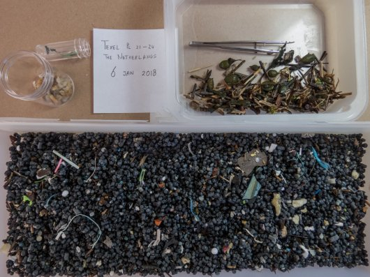 The sorting of sampled materials. After rinsing off the sand, pieces of seaweed or plant remains are removed. Small jars in top left of the photo are for paraffin or sticky materials (grease, degrading latex like material)