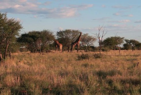 Detecting Animals In African Savanna With Uavs And The