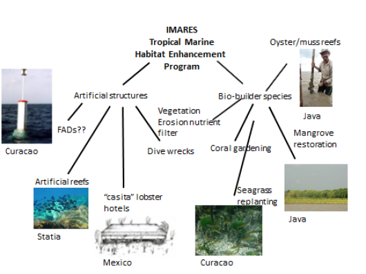 Fig. 1. Habitat enhancement may include a wide range of potential measures involving the use of either artificial structures or bio-builder species. This figure provides an overview including on-going projects of IMARES in different parts of the world.
