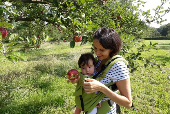 HARVEST; Healthy Apples Research: Valuing Environmental Sustainability of Topsoil