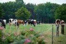 Opiniestuk Gert van Duinkerken in Trouw: Kringlooplandbouw vraagt praktische stappen
