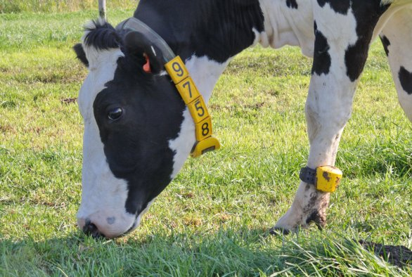 The internet of dairy farming
