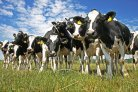 Draagvlak huidige mestbeleid bij agrarisch ondernemers is klein