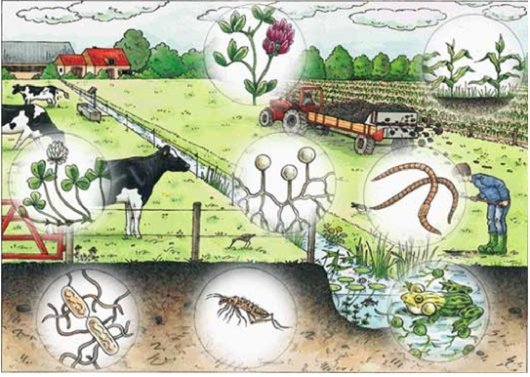 Soil biology wageningen ur for Soil quality indicators