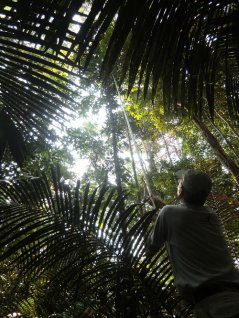 Lourens Poorter collecting leaves in the Amazon rainforest to measure leaf traits. (photo M. Peña-Claros)