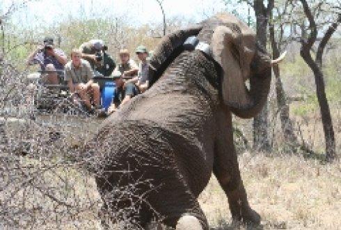 de verspreiding van olifanten in het krugerpark wurTemperatuur Krugerpark.htm #6