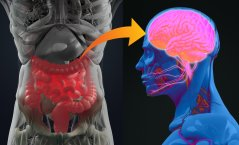 signalling from gut to brain