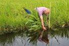 Onderwaterdrains veenweidegebieden veenafbraak bodemdaling effectief