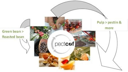 Figure 1. Starting from the (strip-) harvest of the ripe coffee cherry (above left) the bean is separated and used to produce coffee (left arrow) and the pulp (right arrow) is collected and extracted to yield food ingredients incl. pectin for use in e.g. desserts or yoghurts. Source: Pectcof BV.