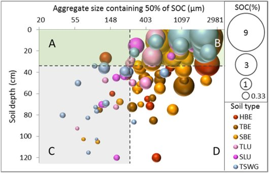 Carbon storage in deeper soil layers may play a prominent role in mitigating climate change and compensating for some of the greenhouse gas emissions from agriculture. In the upper layer of the soil (upper part of the graph), the carbon is mostly linked to large soil particles (right side of the graph). This carbon is easily accessible for e.g. insects and microbes, causing a fast conversion into carbon dioxide.   The lower layers of the soil (lower part of the graph) contain more carbon than expected. This carbon is linked to small soil particles (left side of the graph) and is therefore hard to get to for soil organisms, causing the carbon to remain in the soil for many decades.