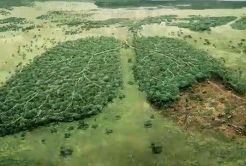 de longen van onze aarde