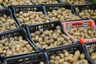 Modelling ventilated potato bulk storage facilities