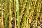 Nieuw boekje over rol biomassa in circulaire economie