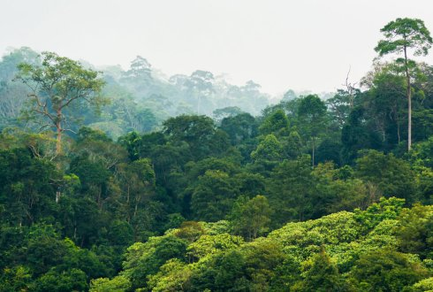 Space-time monitoring of tropical forest changes using observations from multiple satellites