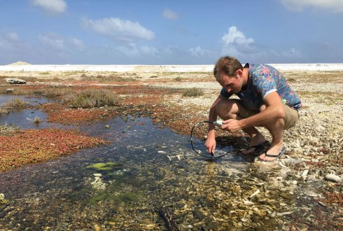 Bioprospecting and directed evolution of microalgae from Bonaire