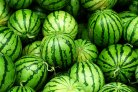 Plant Life about melons, apple scab and big data